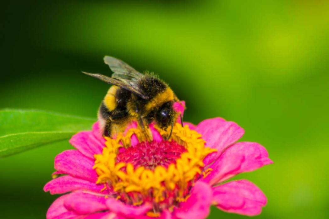 Bloomin' News - Lansing Garden Club